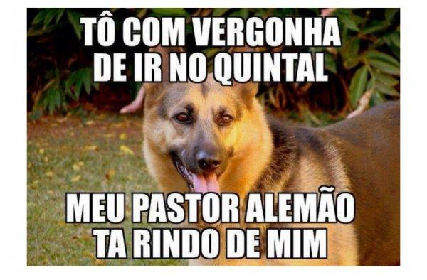 pastor-alemao